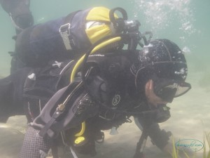 Scuba Diver Paul Freeman Examining the Eel Grass off Swanpool Beach