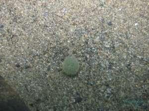 Worm Egg