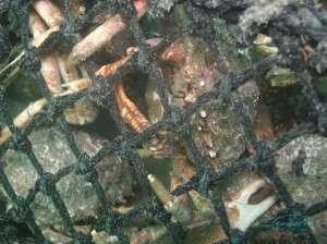 crabpot_captive
