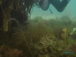 seaweed_05