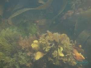 seaweed_09